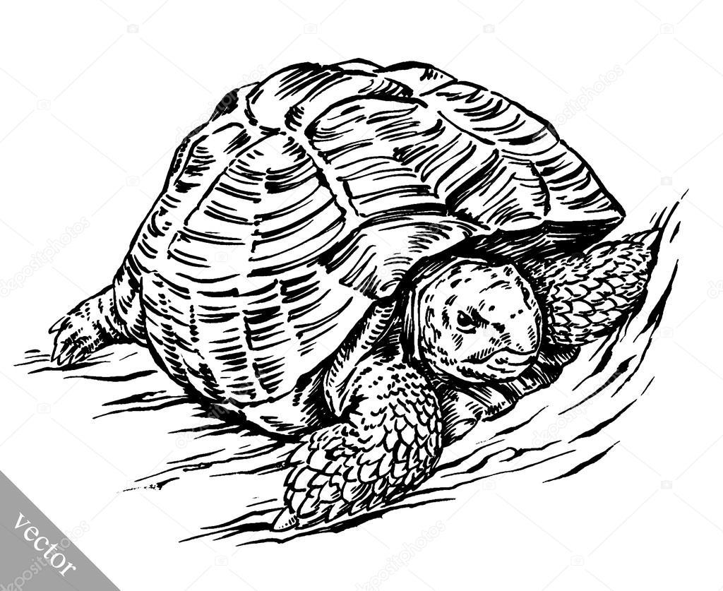 Bekend graveren van inkt tekenen schildpad illustratie — Stockvector  OX66