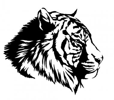 black and white ink draw tiger illustration