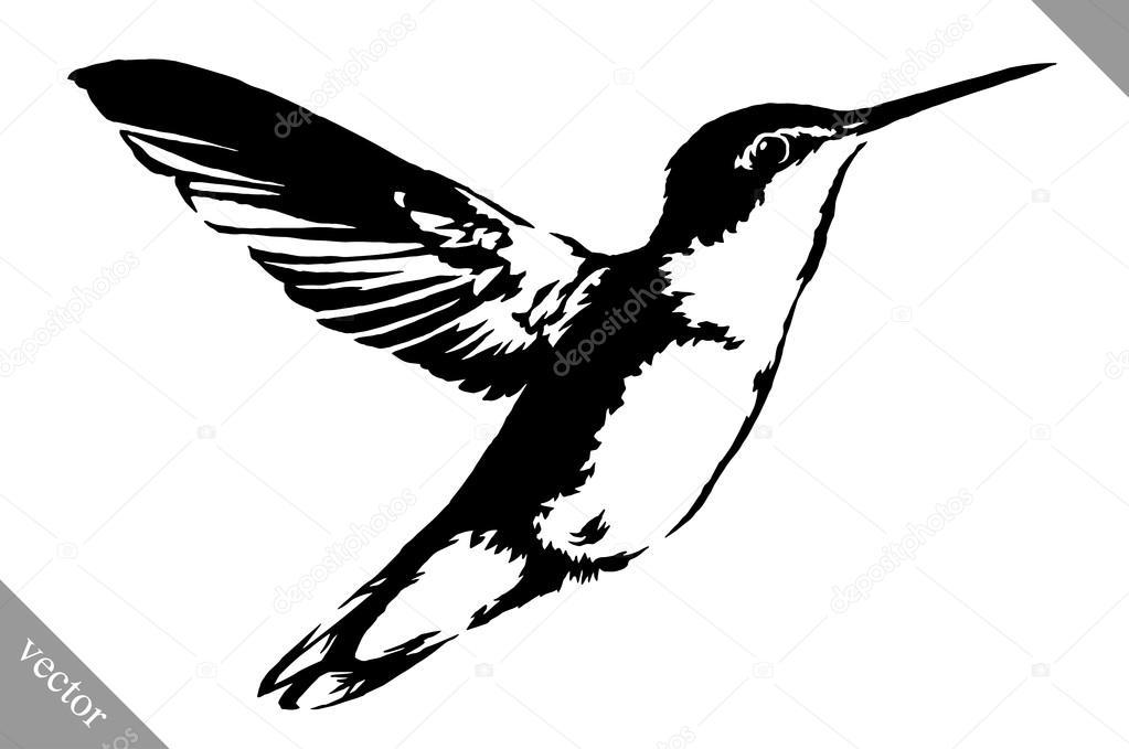 Dibujos Colibri En Blanco Y Negro Ilustración De Vector De