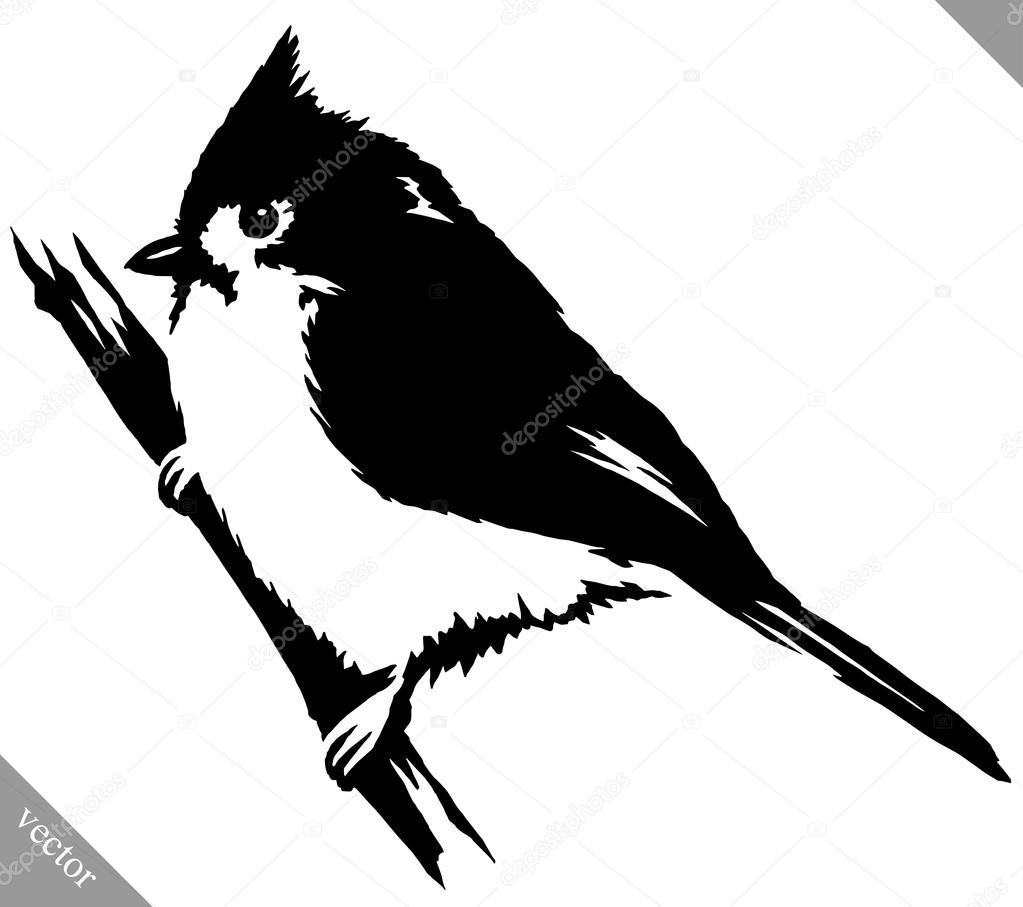 Pintura blanco y negro dibujar la ilustraci n de vector de p jaro cardenal archivo im genes - Blanco y negro paint ...