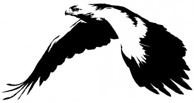 black and white linear paint draw eagle bird illustration