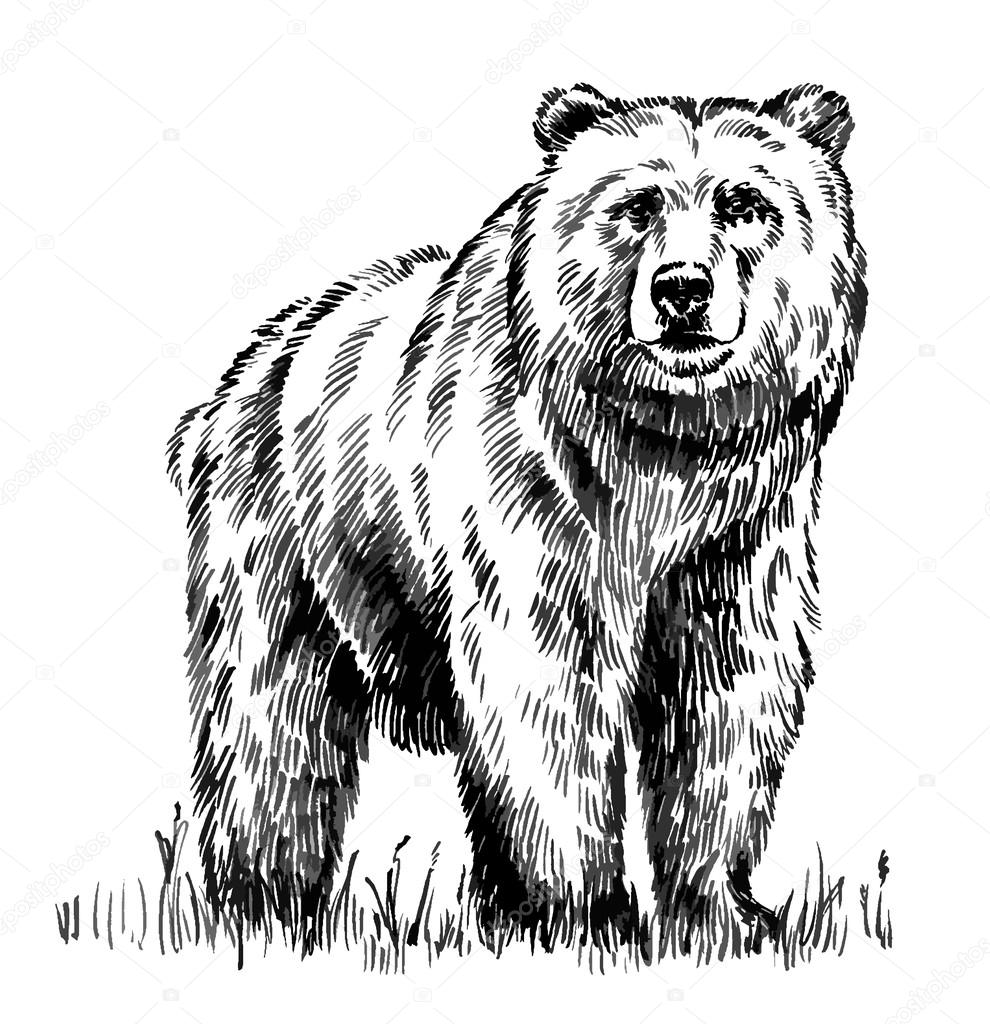 Black And White Engrave Isolated Vector Bear Stock