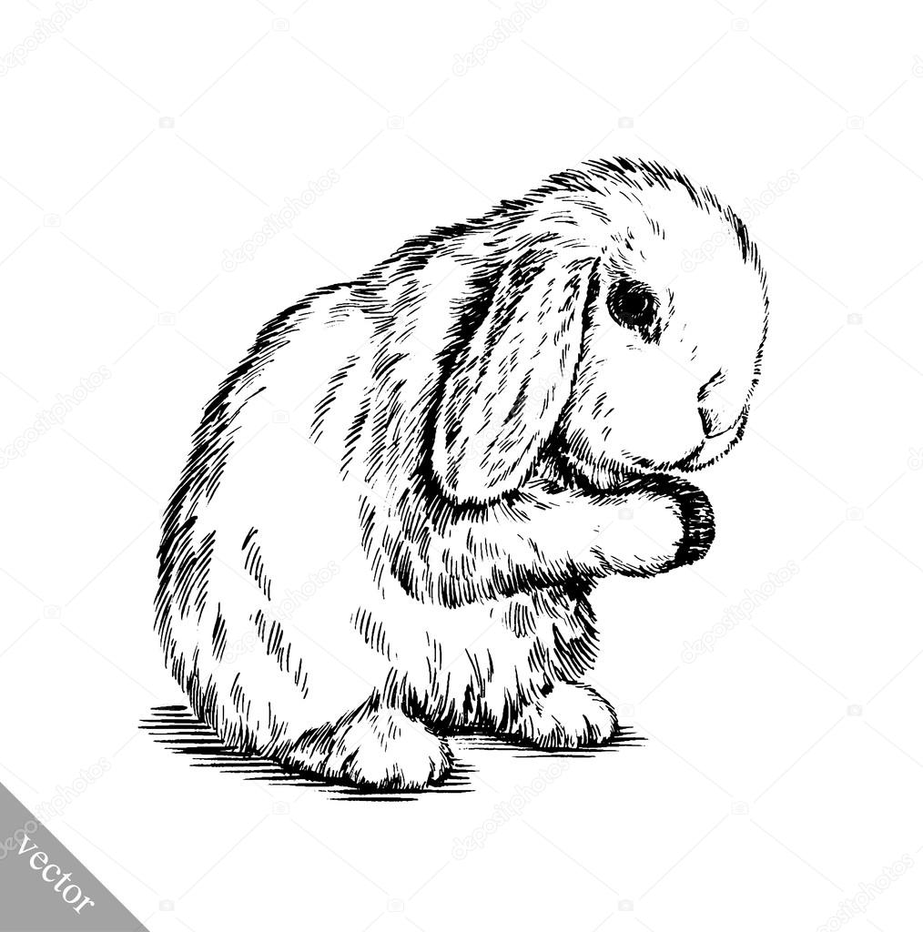Uitzonderlijk borstel schilderij inkt tekenen geïsoleerde konijn illustratie  GI97