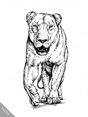 brush painting ink draw isolated lion illustration