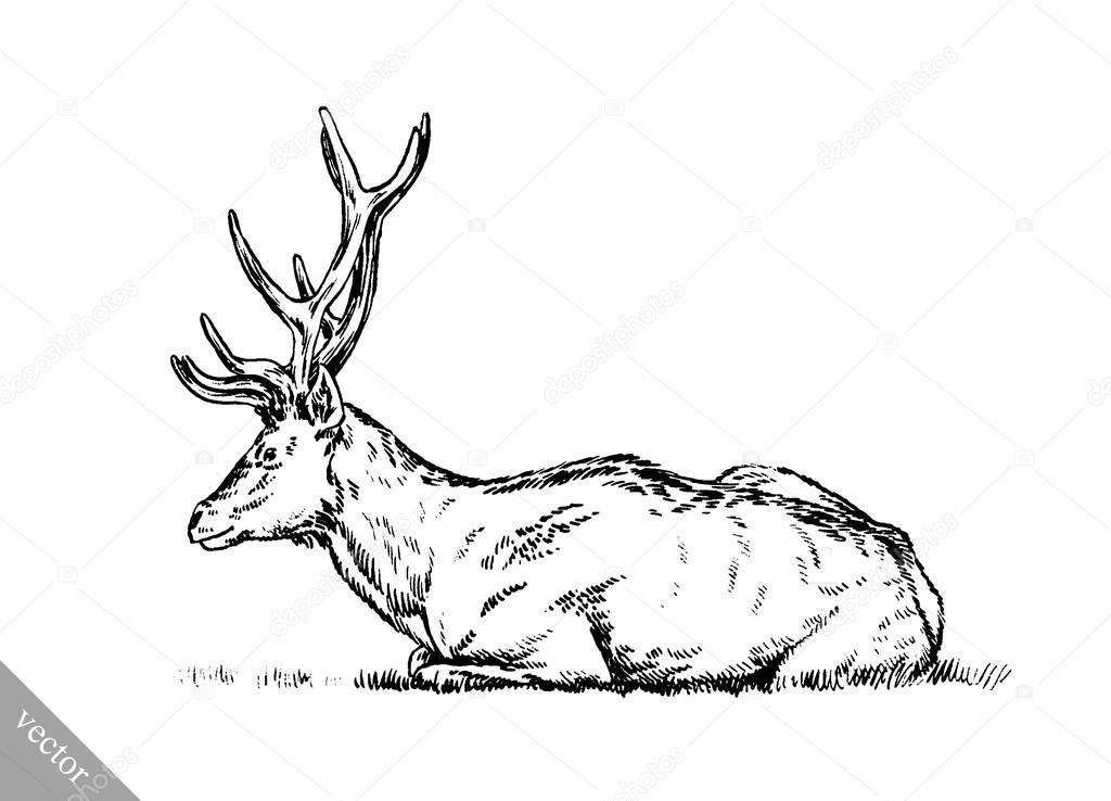 Mürekkep çizim Vektör Geyik Illüstrasyon Boyama Fırça Stok Vektör