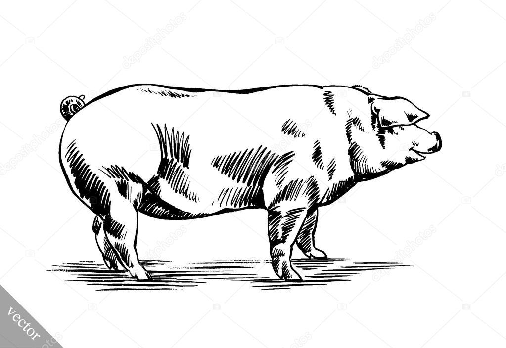 Zeer borstel schilderij inkt tekenen varken illustratie — Stockvector  NU12