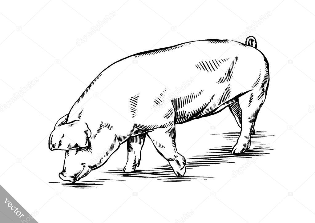 Zeer borstel schilderij inkt tekenen varken illustratie — Stockvector  CI15