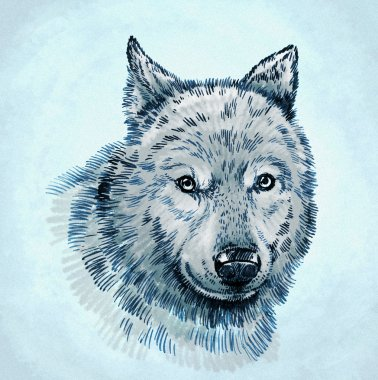 color engrave ink draw wolf illustration