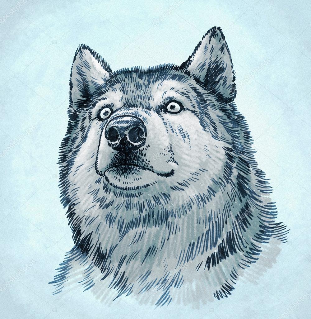 Dibujos Lobos A Color Color Grabar Ilustración De Lobo Tinta