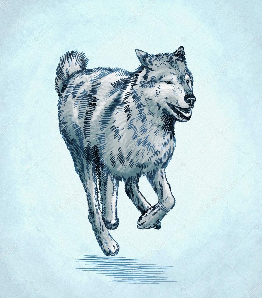 Dibujos Lobos Color Color Grabar Ilustración De Lobo Tinta Dibujo