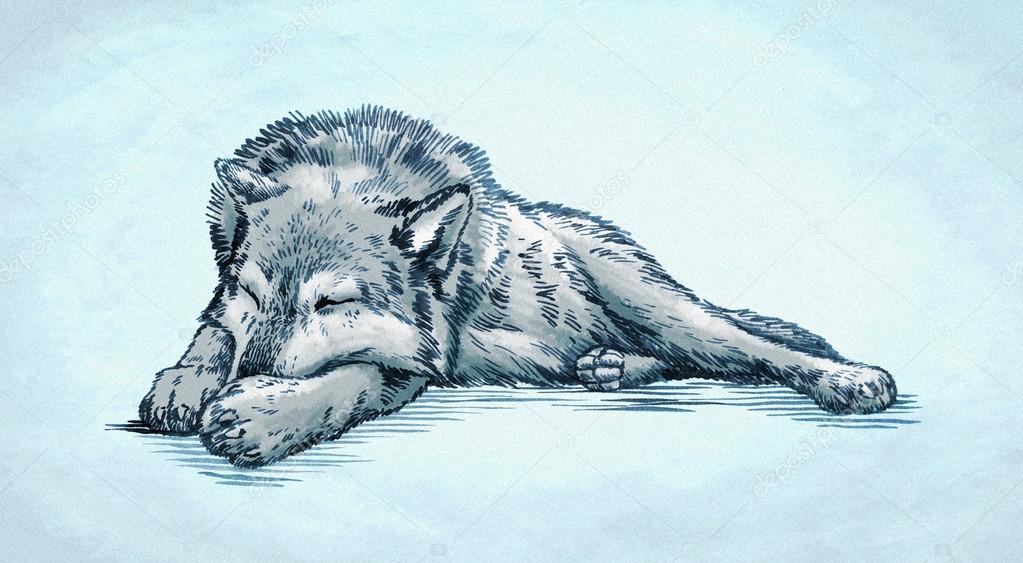 Imágenes De Lobos Para Dibujar A Color Color Grabar Ilustración