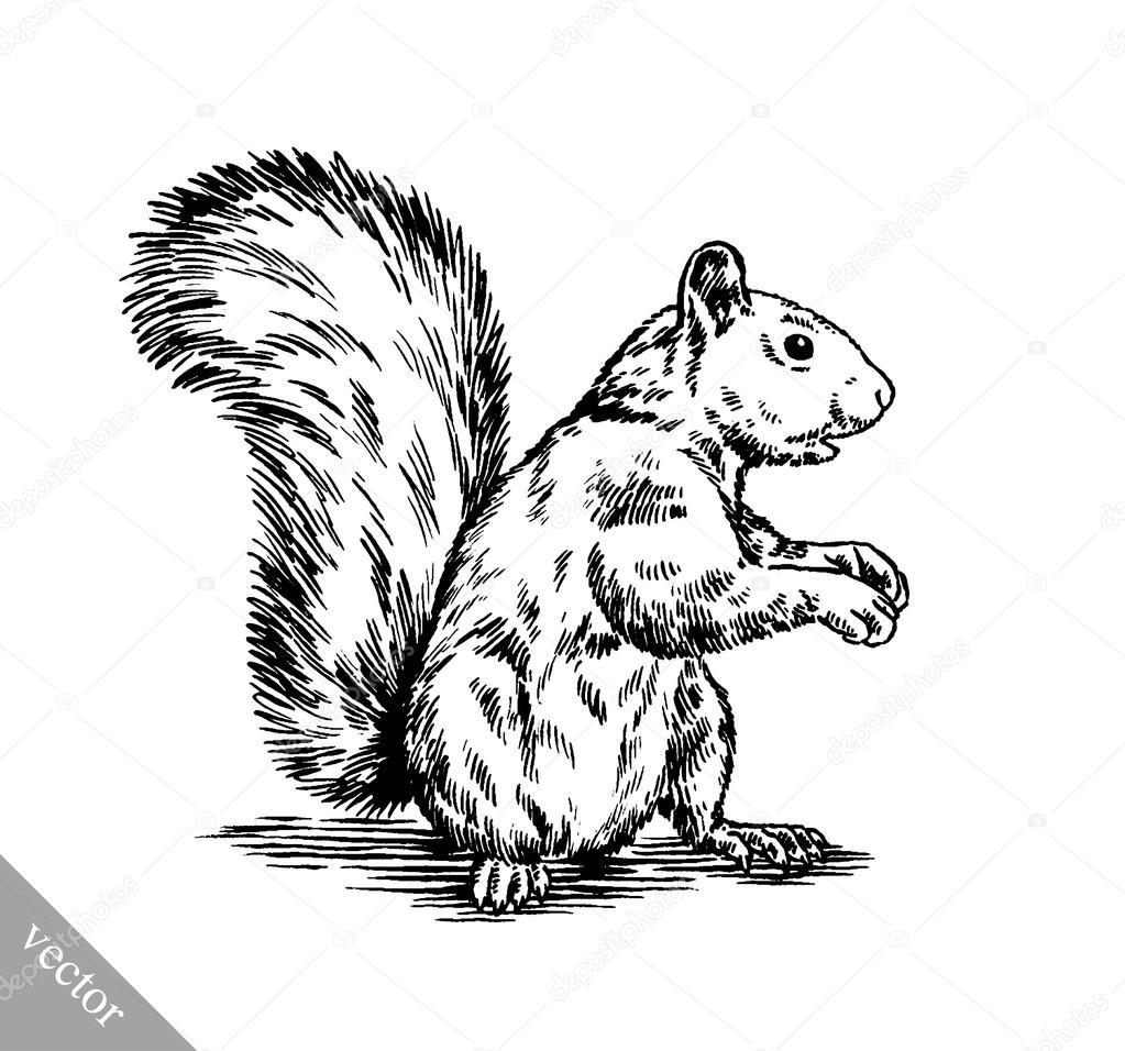 Schwarz Und Weiß Gravieren Isoliert Eichhörnchen Abbildung