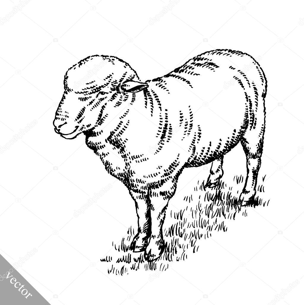Zeer inkt tekenen schapen illustratie graveren — Stockvector  QX58