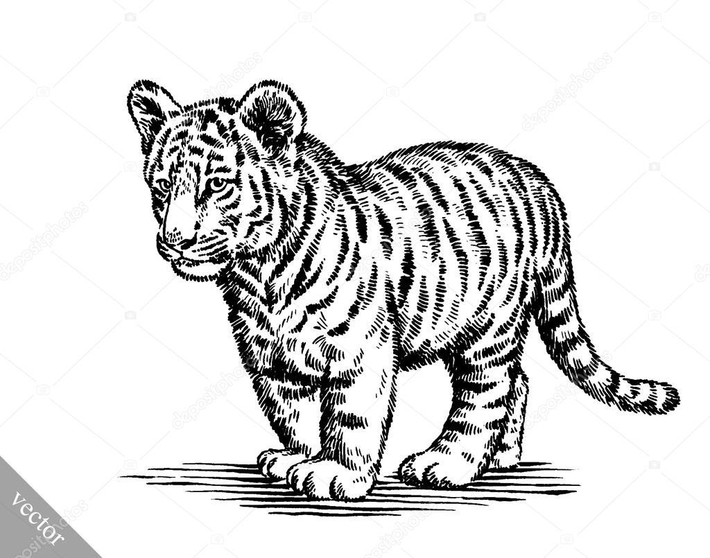Extreem graveren van inkt tekenen tijger illustratie — Stockvector  OJ98