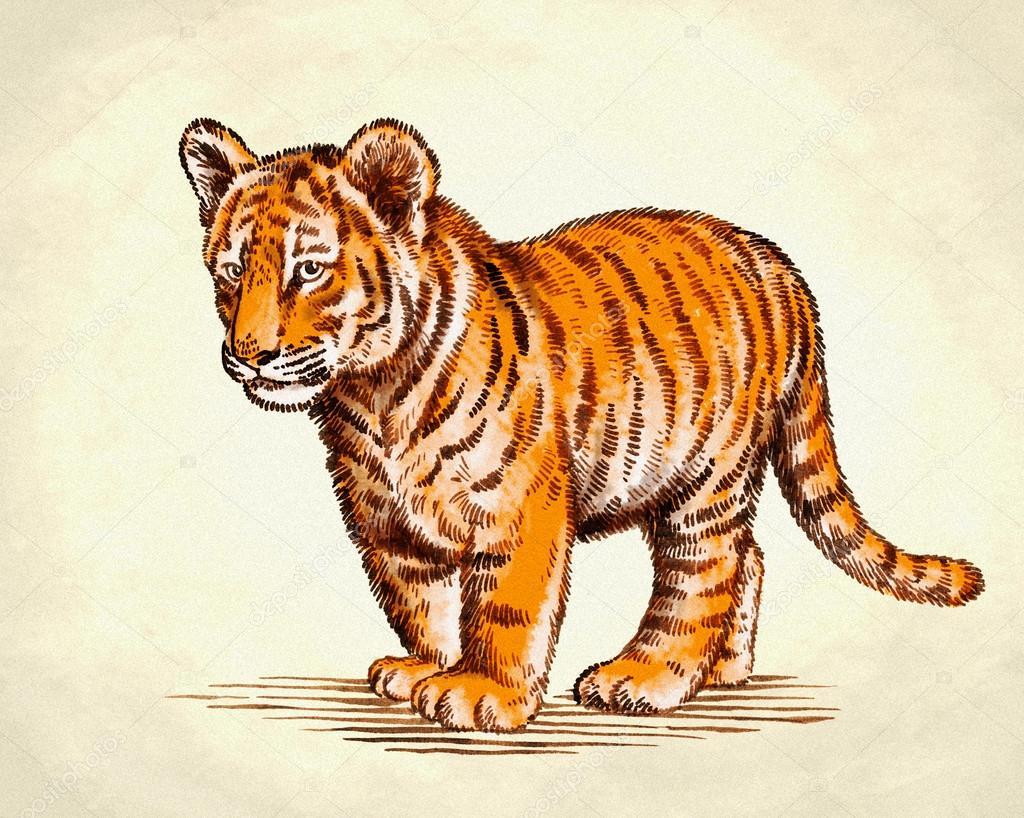 Freihand Zeichnen Tiger Abbildung Gravieren Stockfoto