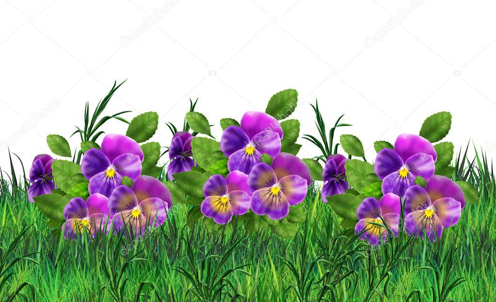 Pansy flowers on white background viola tricolor flowers meadow pansy flowers on white background viola tricolor flowers meadow realistic painting pansy field mightylinksfo