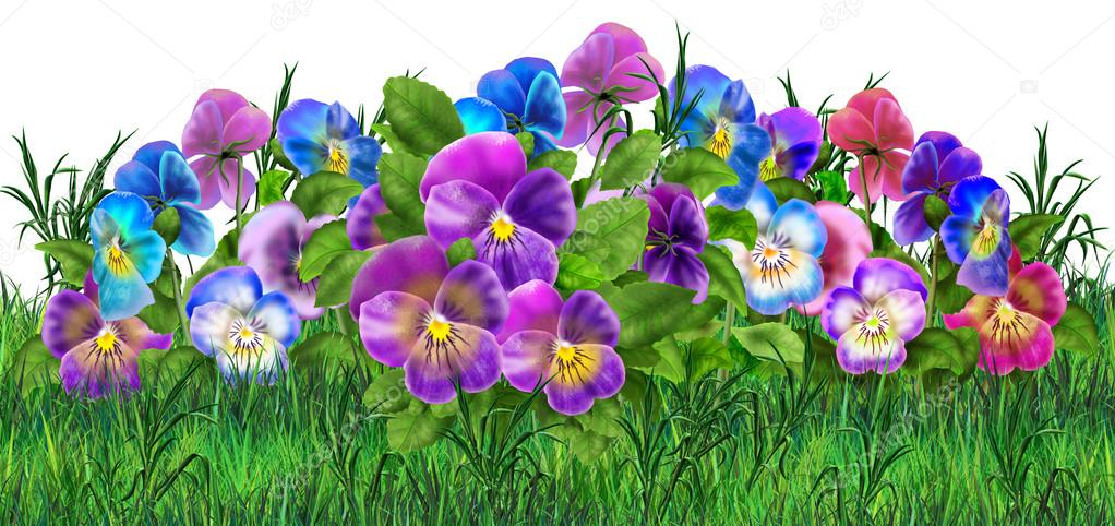 Pansy flowers realistic painting. Viola tricolor flowers meadow. Pansy field, garden. Summer flowers Multicolored pansies. Digital illustration. For Art, Print, Web design.