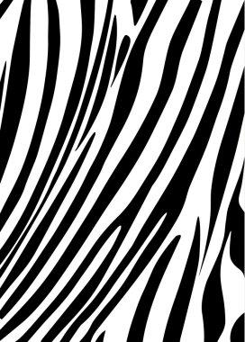 Zebra background, pattern