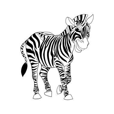 Zebra isolated on white background. Zebra animal.