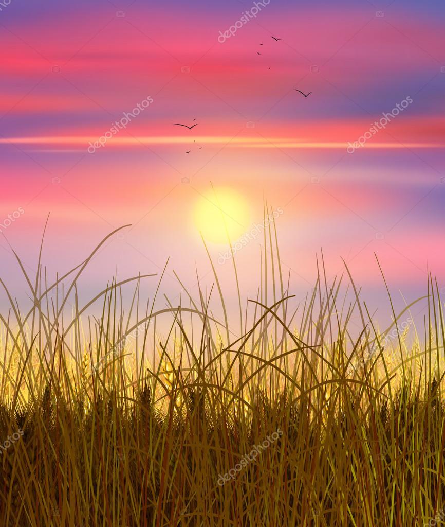 Wheat field sunset sky and sun wheat field sun rays on horizon in sun rays on horizon in rural meadow digital painting illustration wallpaper photo by sofiartmediaail thecheapjerseys Choice Image