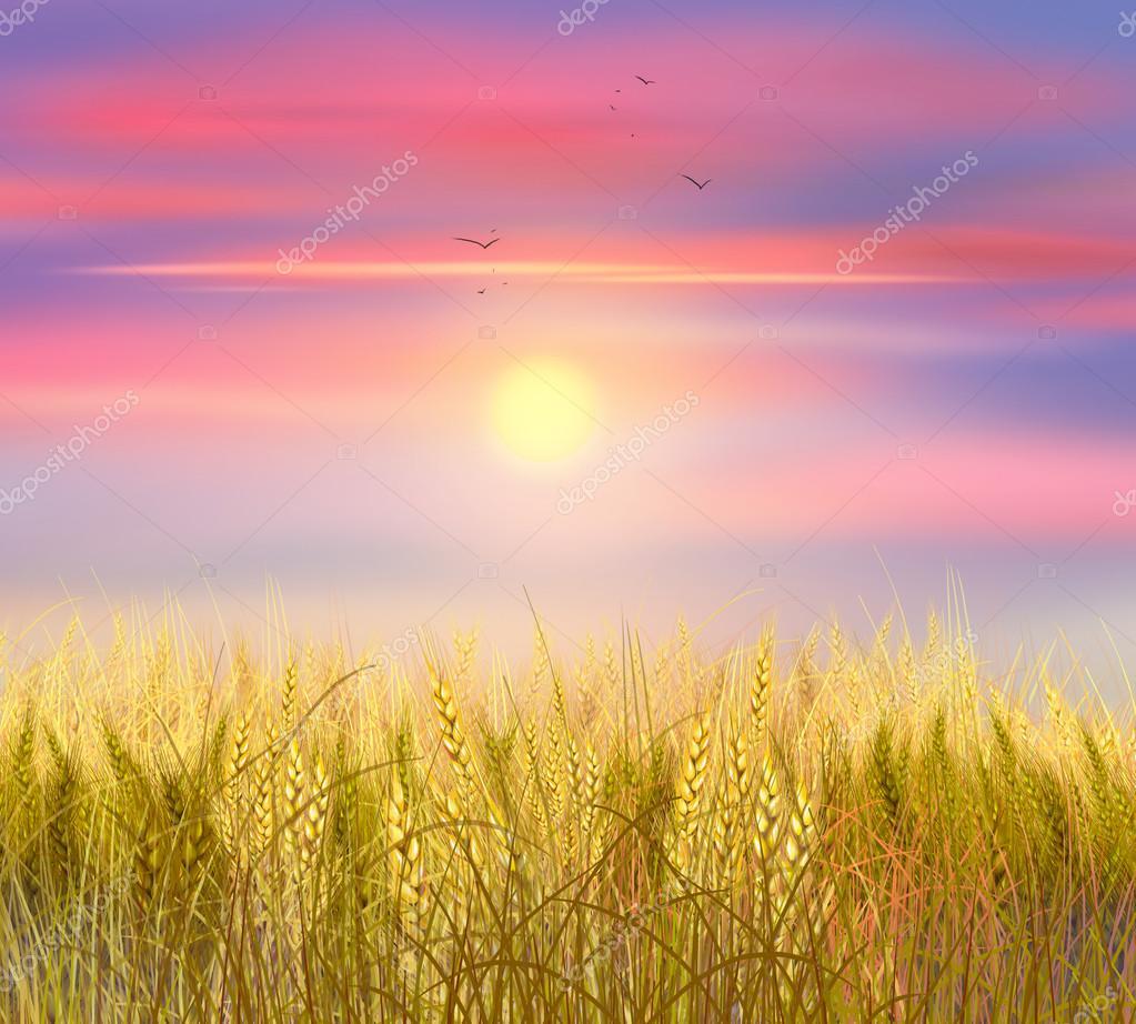 Пшеница обои рабочего стола 7