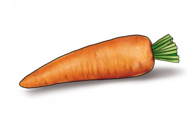 single carrot isolated on a white background Digital Illustration
