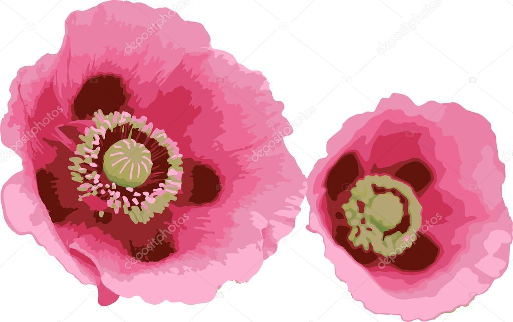 Fiori 94.Pink Flowers Fiori Rosa 01 Stock Vector C Valentinazingaro