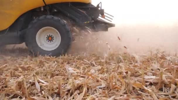 Zblízka velký rotující kolo kombinovat pracuje na kukuřičném poli nebo farmě. Sklizeň sklízí kukuřici a nechává za sebou odpad. Agronomický koncept. Pomalý pohyb Boční pohled