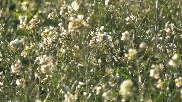 Sezónní kytice v letce