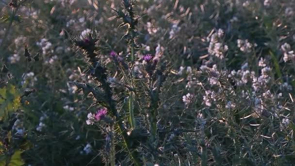 Sezónní kytice v kampani