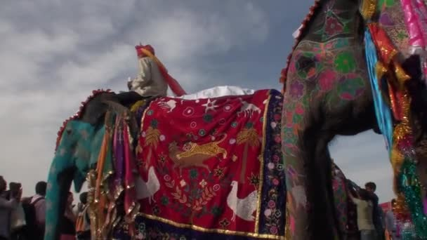 Traditional feast of the elephants in jaipur, state of Radjasthan, India2013