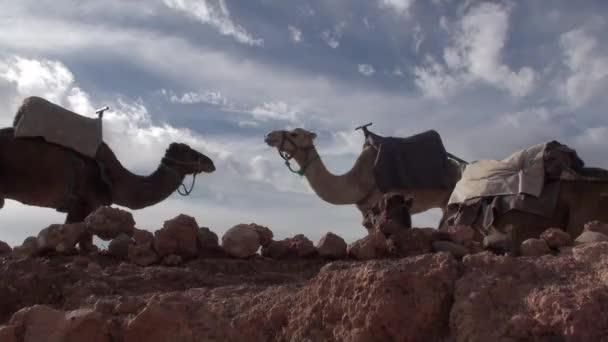 Pouštní Palmové stromy a skály v údolí Draa v Maroku