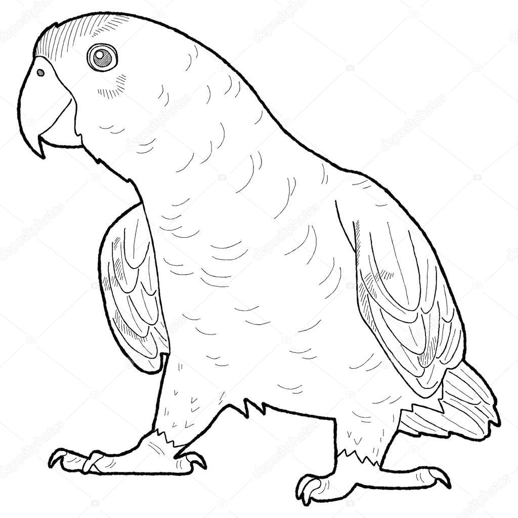 Imágenes: animales de la selva amazonica para colorear | Pájaro de