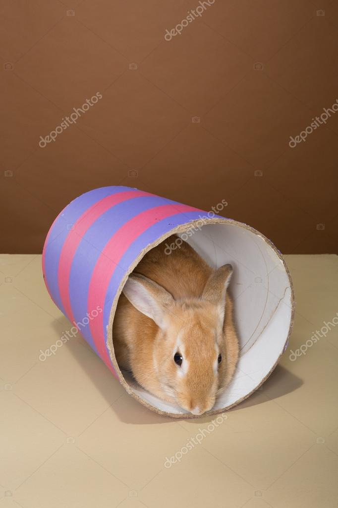 bunny rabbit posing in a tube in a studio against a cream and brown background