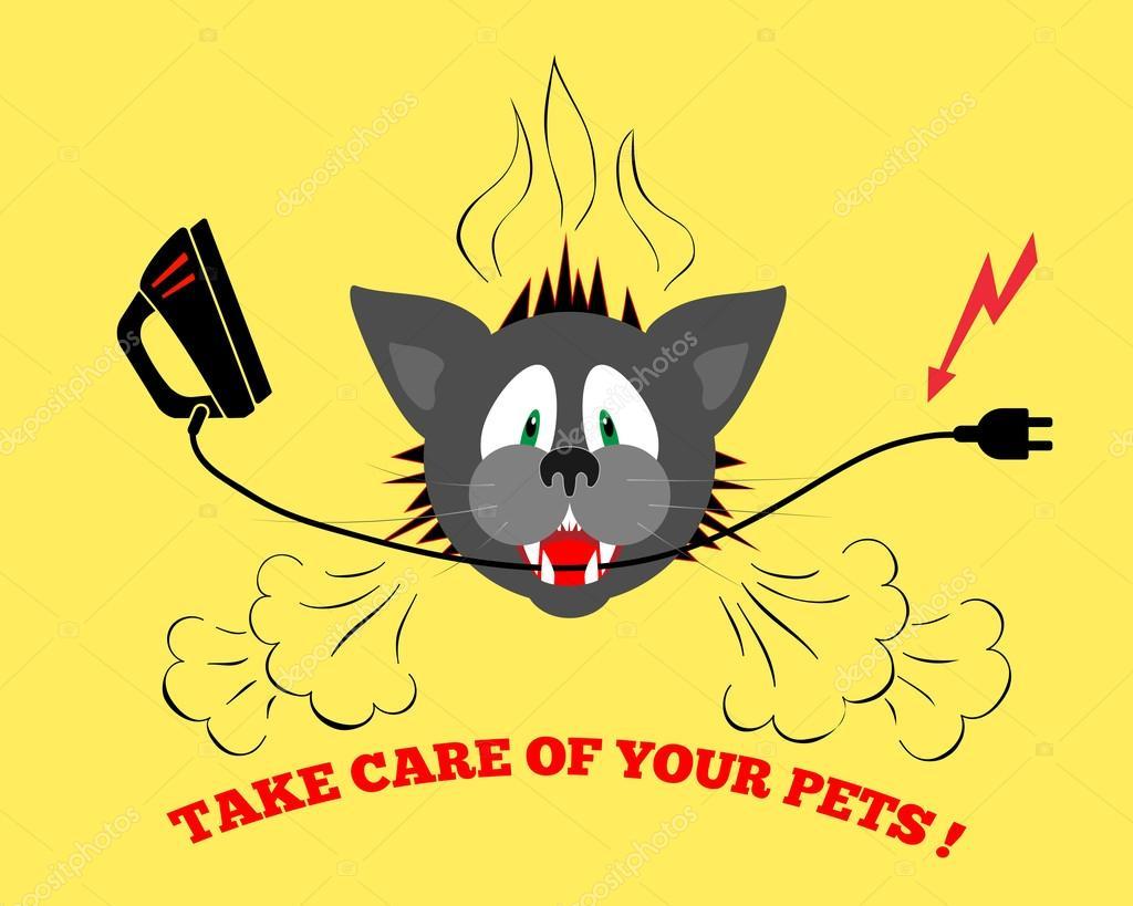 Katzen Kopf elektrischen Draht beißen, Kabel. Pflege von Haustieren ...