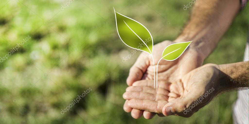 Business and nature metaphor