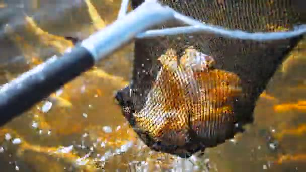 lov ryb v rybářských sítí