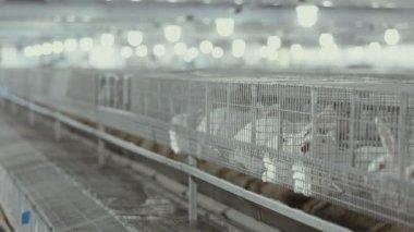 πιπιλίζουν πουλί δωρεάν βίντεο