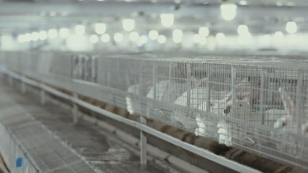 králičí farma. chov králíků