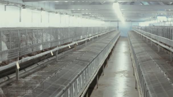 industrial rabbit farm