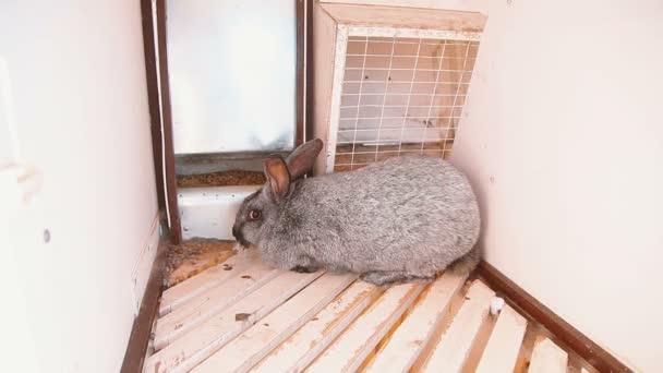 šedý králík uvnitř klece