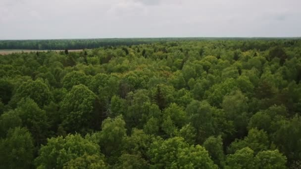 top view of beautiful green forest
