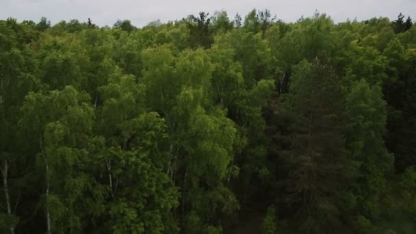 flying in the birch forest