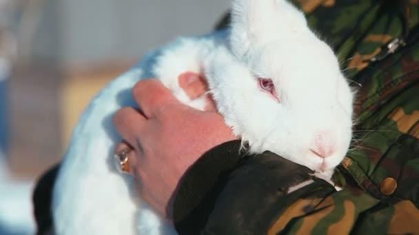 vzít králíčka do rukou