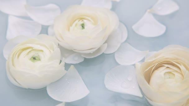 Ve vodě se pomalu vznášejí květy ranunkulu s bílými okvětními lístky. Zpomalený pohyb.