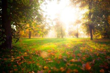 beautiful autumn in England park