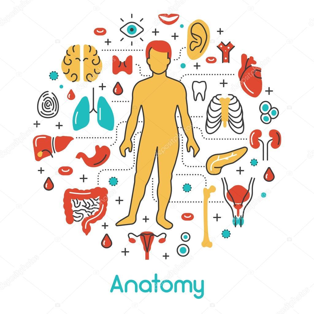 Anatomie schmalen Grat-Vektor-Icons Set mit menschlichen und innere ...