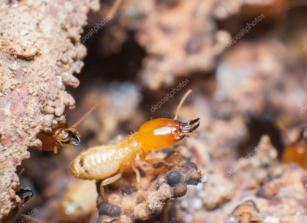 Close up termites or white ants in nest.