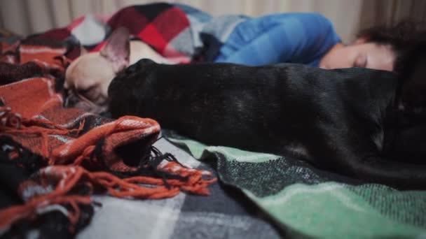 nő és pár aranyos francia bulldog kutyák alszik az ágyban plaid otthon