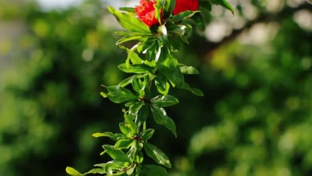Větev stromu krásné zelené s červenými květy